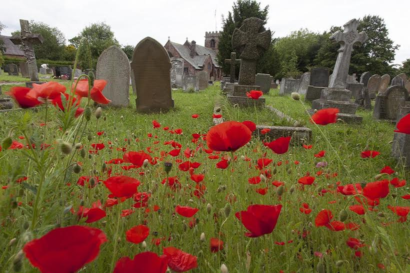 Poppies, St Alban's Churchyard, summer 2014